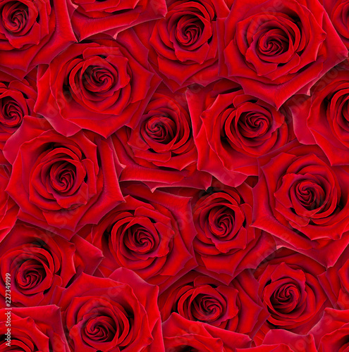 Seamless floral pattern. Chaotic arrangement of buds. Red rose flower. - 227349199