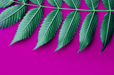 neon colored leaves on pink background