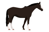 schwarzes Pferd - 227356777