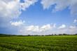 Leinwanddruck Bild - Strawberry field
