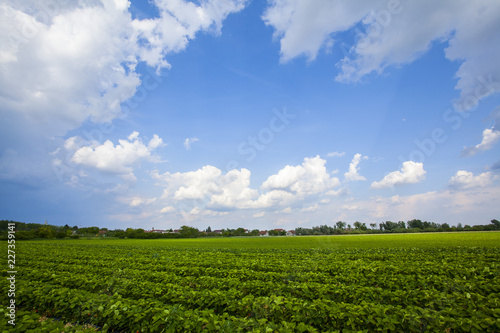 Leinwanddruck Bild Strawberry field