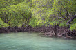 Quadro Dense mangrove forest in shallow tropical waters