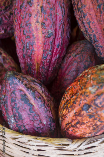 Foto Murales Basket of ripe red cacao pods piled in soft tropical sunlight at a beach bar in Bahia, Brazil