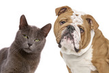 Cat and dog - 227384504