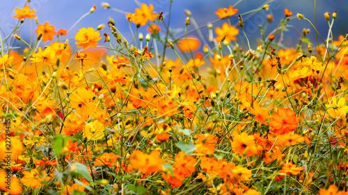 Wild flowers  - 227394115