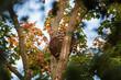 Three baby raccoons on a tree