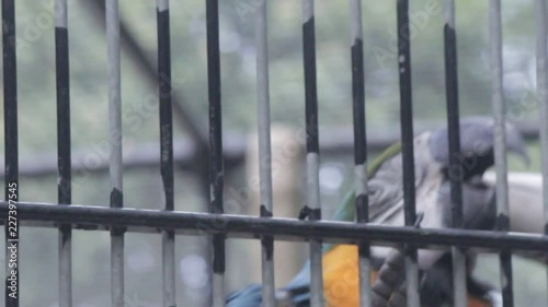 Naklejka zoo parrot captured in full HD in a  cinestyle colorprofile