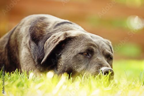 Hund entspannt   - 227411937