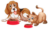 Dog and cat eating - 227446569