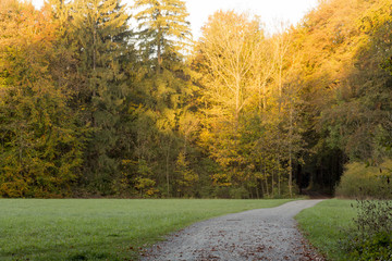 A forest path leads across a clearing into an autumn forest with colorful foliage © were