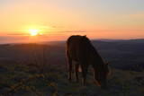 Horse are sunset