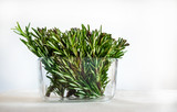 Rosemary Twigs in a Glass Pot on White Background  - 227478985