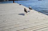 Mewy na drewnianym molo nad wodą w słoneczny dzień.