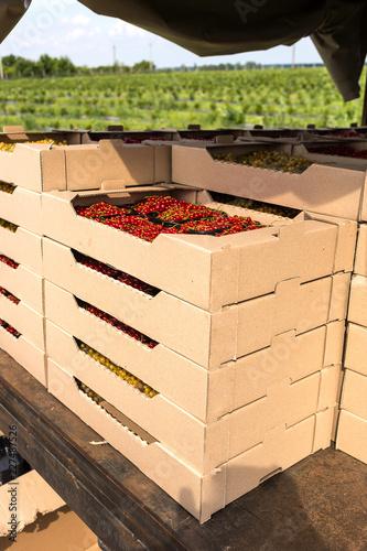 Foto Murales Plastic box is full of fresh currant in farmer market.