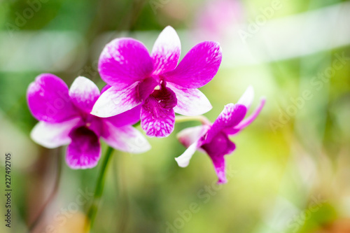 Orchid flower on branch - 227492705