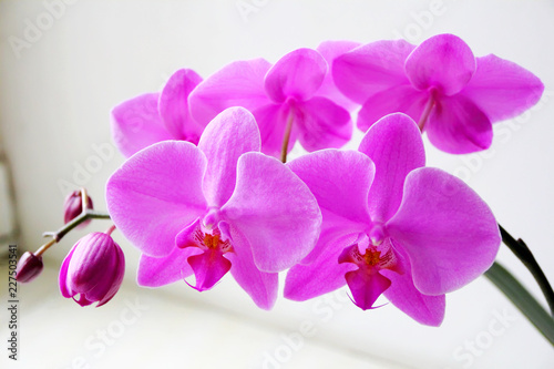 Beautiful orchid - 227503541