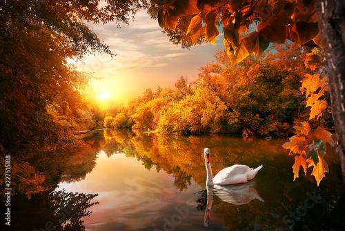 Fototapety, obrazy : Swan on autumn pond