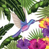 colibri Exotic and tropical bird - 227575936