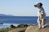 dog sitting on the rocks looking at the sea