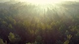 Summer foggy forest early in the morning. Aerial drone shot - 227594744