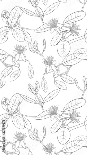 Pattern, background with with feijoa flowers - 227599573
