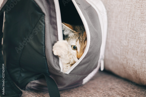 Kitten hiding in a backpack.