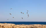 Flock of many sea gulls flying hovering in blue sky