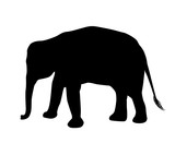 Elephant silhouette isolated on white background vector