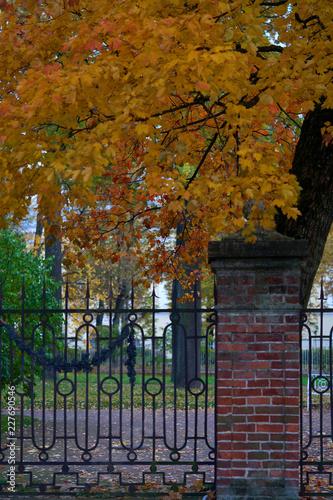 Jaskrawi jesień liście na drzewach w parku