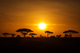 Acacia trees at sunrise with beatiful red sky in background. National Park of Serengeti Tanzania. - 227691999