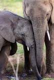 Elephant compassion
