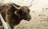 Wild ox park - 227702911