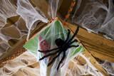 Spiderweb on halloween - 227702922
