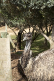 Look ostrich zoo - 227702964