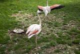 Flamingos in park - 227703100