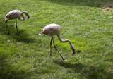 Flamingos in park - 227703110