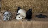 Human skull  head - 227703165