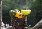 Exotic parrot bird - 227703173