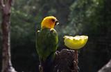 Exotic parrot bird - 227703176