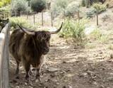 Wild ox park - 227703184