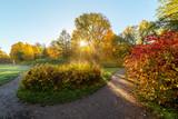 morning sun in autumn park - 227728757
