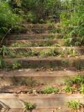 木洩れ日の中の木の階段