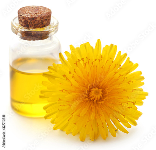 Medicinal dandelion with essential oil