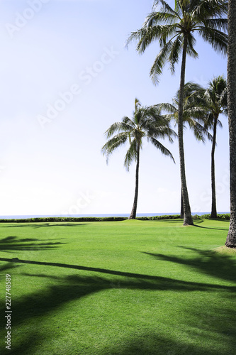 golf course with palm trees and blue sky