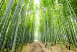 Fototapeta Bambus - 竹林の道 © tenjou
