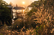 Quadro Warm sunset on tall grass