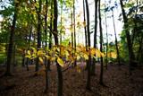 Nahaufnahme vom bunten Blättern im Herbst. Hintergrund unscharf - 227767569