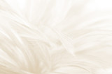 Beautiful blur white -brown feather pattern texture background - 227768524