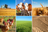 Agriculture et paysage de France - 227774941