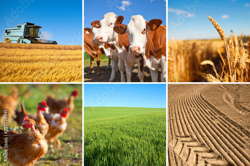 Rolnictwo i krajobraz Francji